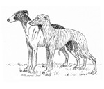 Whippet items with this design