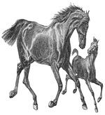 Horses I'm the big sister!