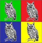 Owl in color