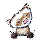 Pocket Ferret