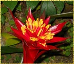Bright tropical plant