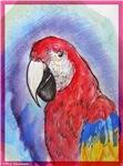 Scarlet Macaw, parrot, art,