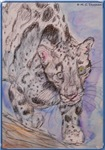 Snow Leopard! Wildlife art!