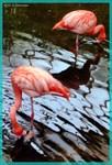 Flamingos! Wildife photo!
