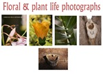Floral & plant life photographs
