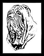 Mastino Sketches