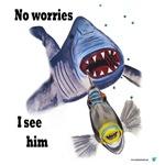 Shark an Trigger-fish