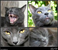 Clarissa Harwell's Four Greys