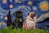 STARRY NIGHT<br>& 2 Pugs