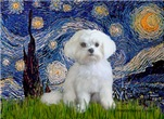 STARRY NIGHT<br>& Maltese