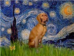STARRY NIGHT <br>& Vizsla