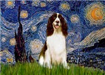 STARRY NIGHT <br>& English Springer Spaniel (Liver