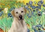 IRISES<br>Yellow Labrador 7