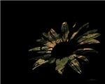 Camo Flower
