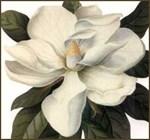 Floral Foliage Fruit Designs