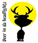 Deer in da Headlights
