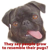 Pugs resemble owners - Black