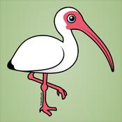Birdorable American White Ibis