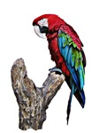 macaw , bird design gifts