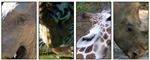 Animals Of the Philadelphia Zoo