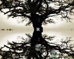 Hebrew Tree Of Life