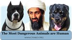 The most dangerous animals are human