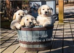 Pups-in-a-Tub Collection