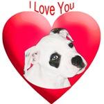 Valentines American Bulldog Puppy
