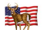 American White Tail Deer Buck