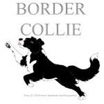 Border Collie Colors