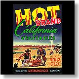 Hot Brand Vegetables