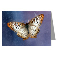 Nature Photography Greeting Cards
