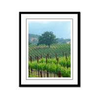 Napa Valley + Wine Country Framed Photographs