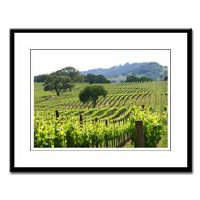 Wine Country Gifts - Framed Prints