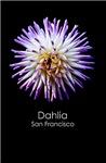 San Francisco Dahlia Posters