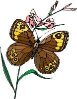 Butterfly Fields 1