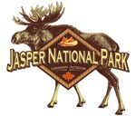 Jasper Natl Park Moose