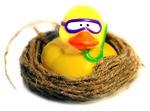 Nest Duck