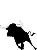 Spain Toro Bull