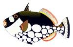 Clown Triggerfish fish