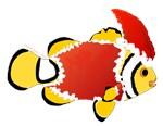 Christmas Clownfish