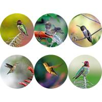 Just Hummingbirds
