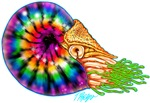 Hot Rod and Tie Dye Nautilus