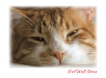 Get Well Cat Cards