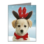 Dog Cards and Gifts