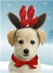 Rein-Dog Christmas Cards