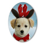 Dog Christmas Ornaments and Apparel