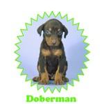 Doberman Pinscher Pup t-shirts & gifts