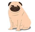 Portly Pug
