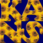 Kansas - Sunflowers